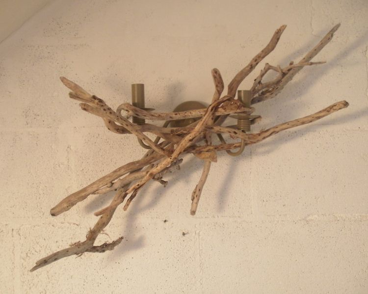 Driftwood Wall Light